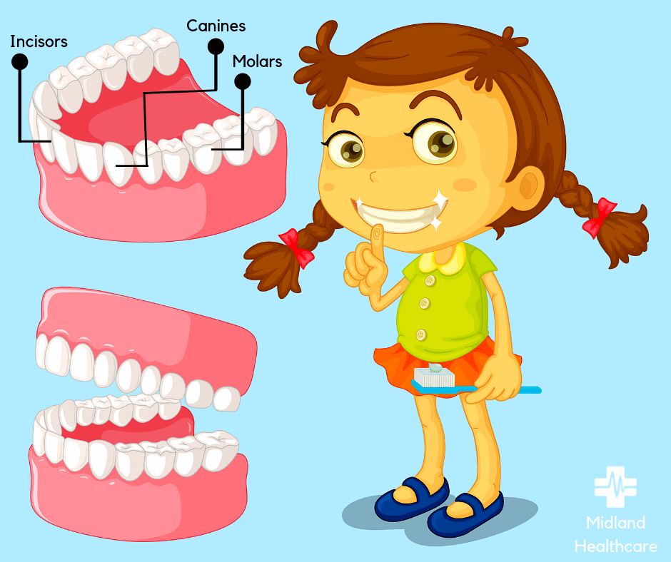 type of teeth in children